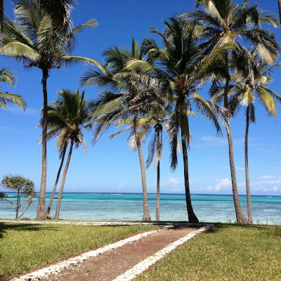 Newark to Zanzibar flights