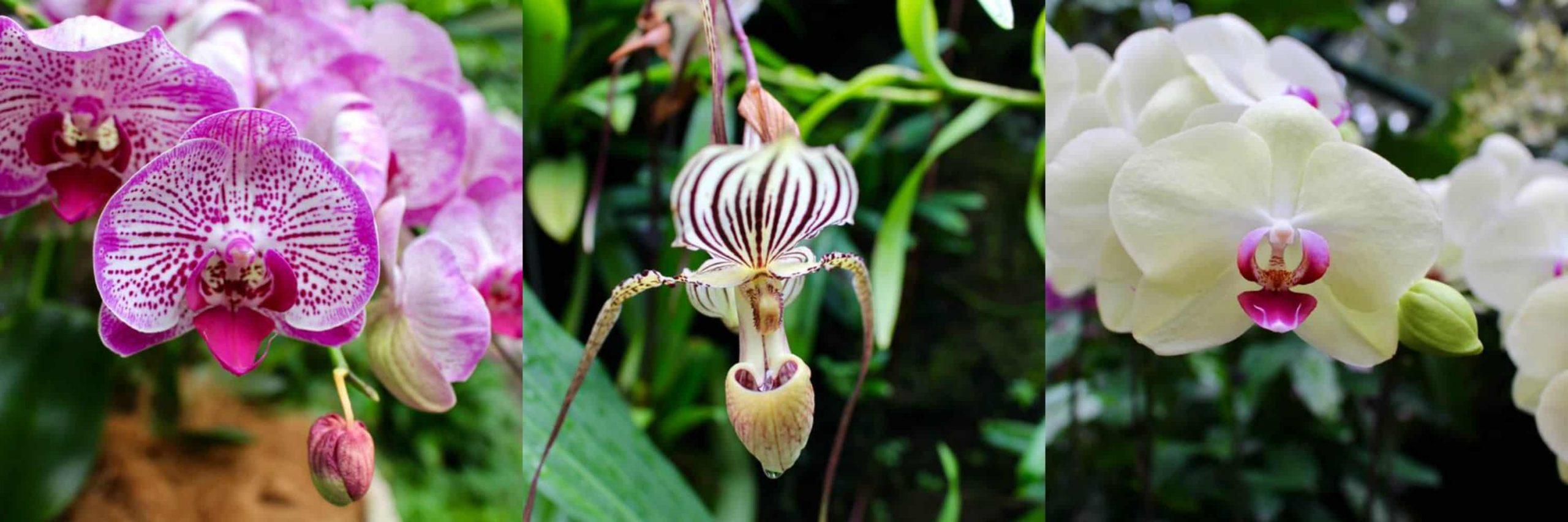 Orchid Garden, singapour