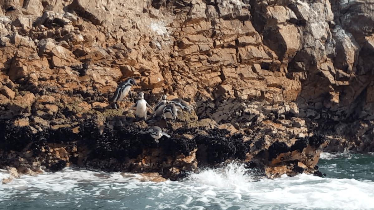 Sortir des sentiers battus au Pérou: désert… et pingouins?