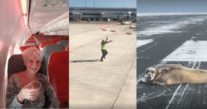 Seule à bord d'un avion, phoque sur la piste, employé qui danse et incident Air Canada