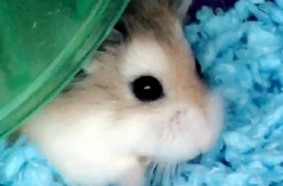 Une passagère dit avoir noyé son hamster à la demande d'une compagnie aérienne