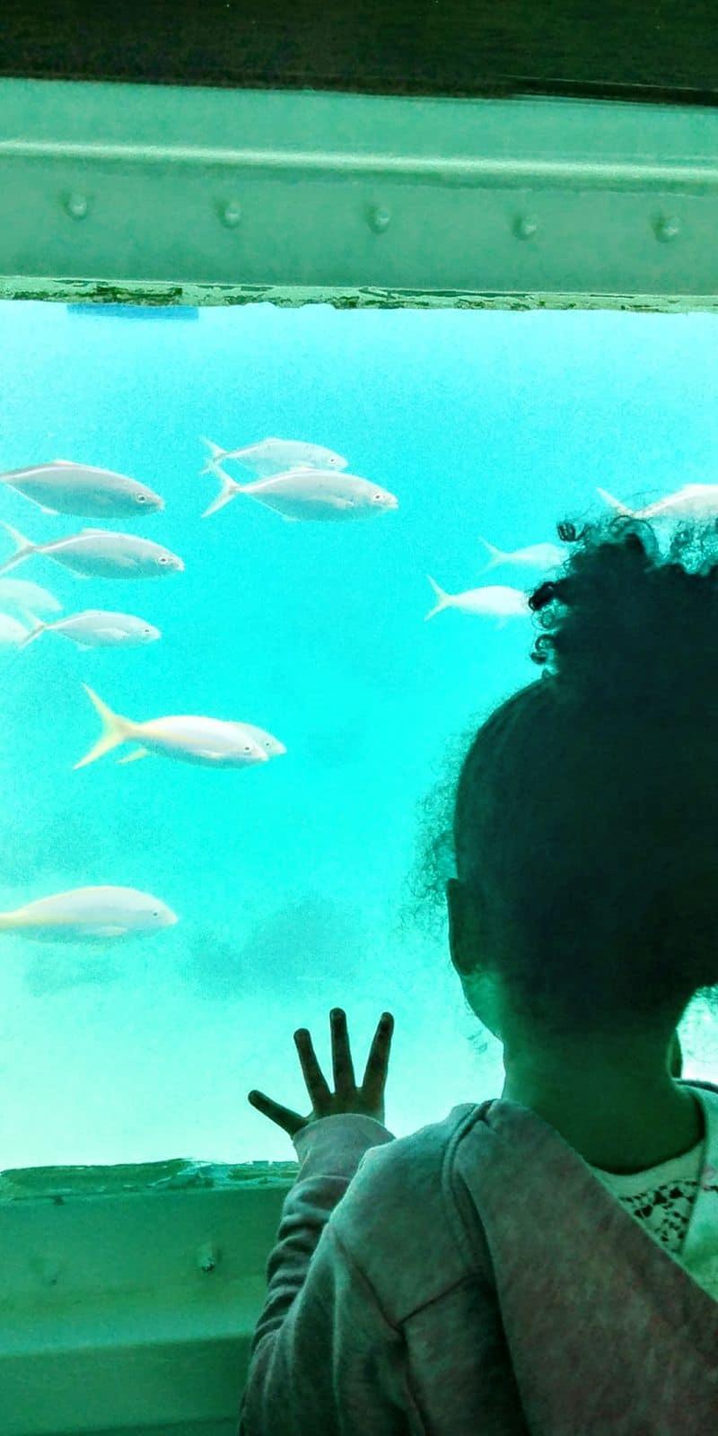 À la découverte des poissons!