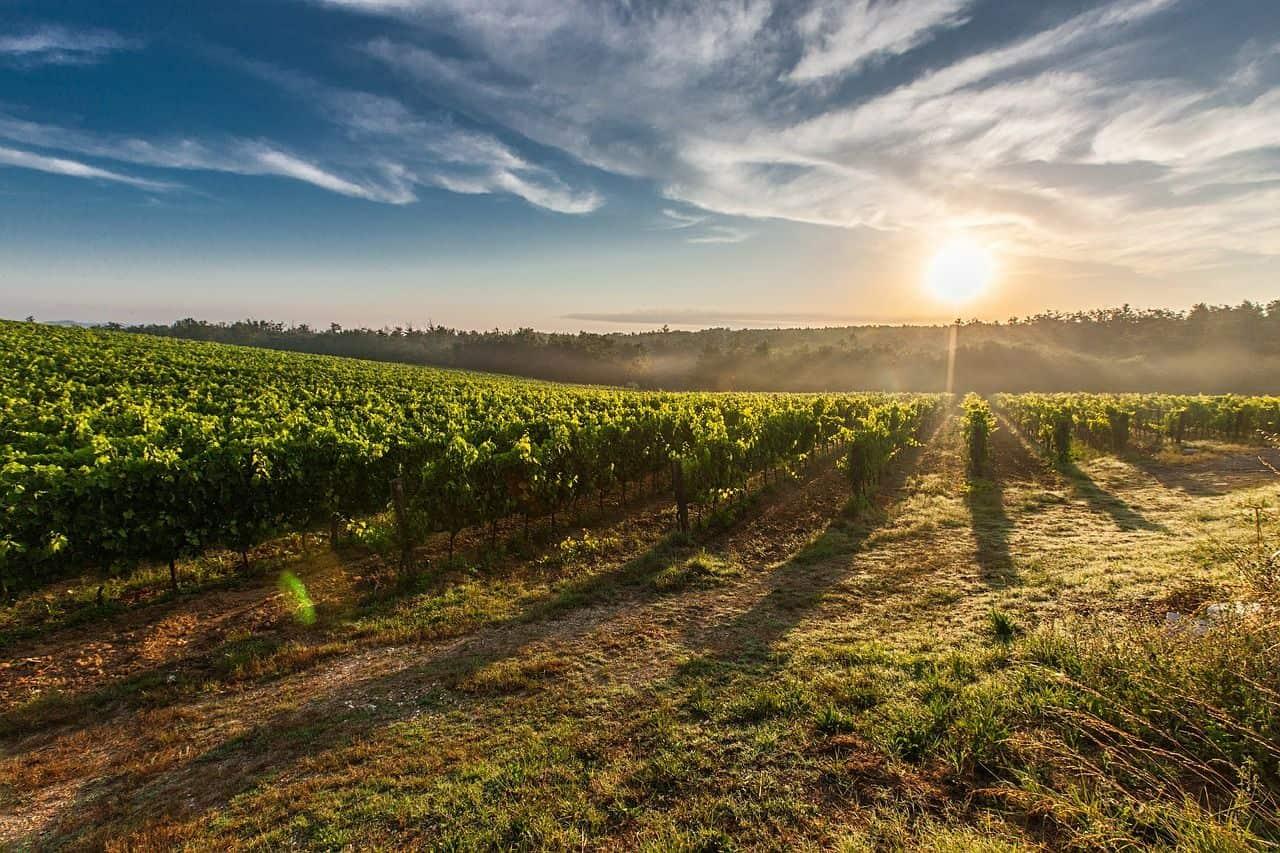 Top 5 raisons pourquoi tu devrais te booker un «wine tour» lors de ton prochain voyage