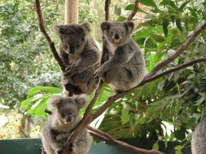 Read more about the article Top 5 pays à visiter pour les « animal lovers »