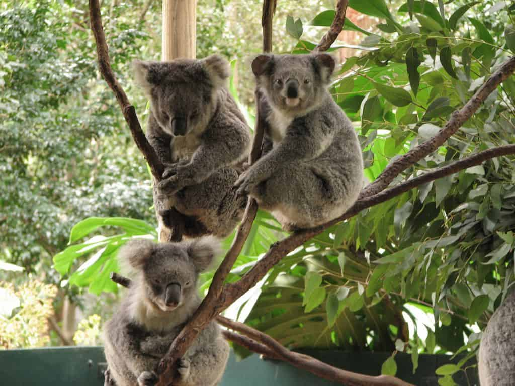 You are currently viewing Top 5 pays à visiter pour les « animal lovers »