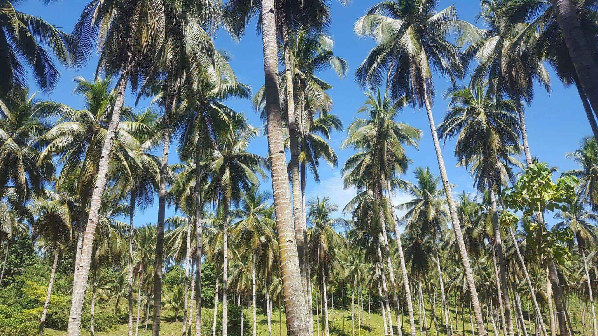 2 îles pour sortir des sentiers battus aux Philippines