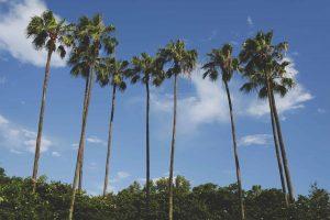 Comment aller en Floride en VR gratuitement cette semaine