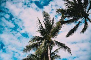 Comment s'envoler en Floride pendant les Fêtes pour 206$ (avec un petit roadtrip)