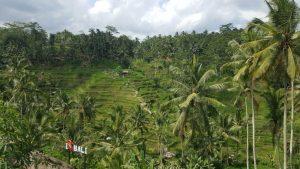 Astuce pour aller à Bali pas cher