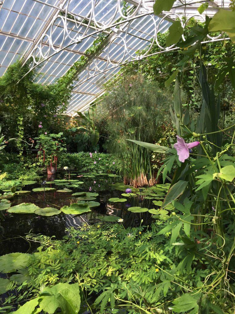 L'intérieur du serre aquatique du Kew Garden.