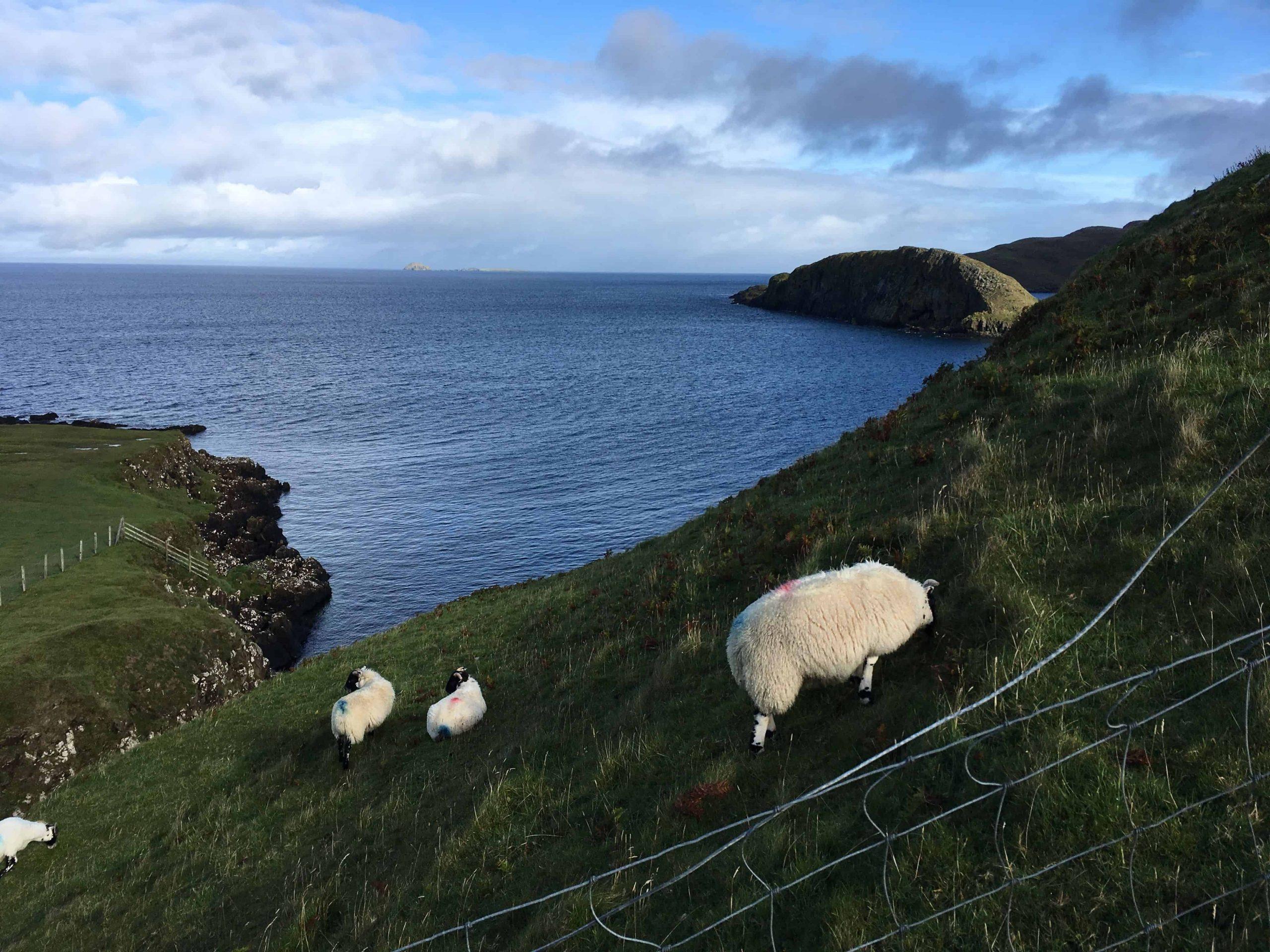 Un mouton sur le bord d'une falaise près de la mer sur L'Isle de Skye.