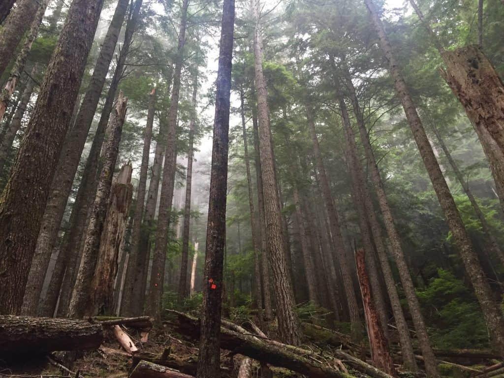 Ça commence raide sur la Sunshine Coast Trail, BC (Partie 1)