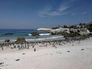 Afrique du Sud: 14 jours pour 1198$ vols et hébergement inclus