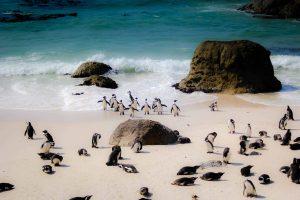 """5 endroits inusités où tu peux trouver des """"pingouins"""""""