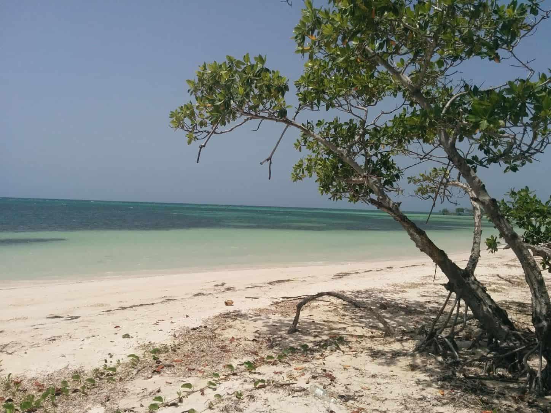 plage de Cayo Jutias