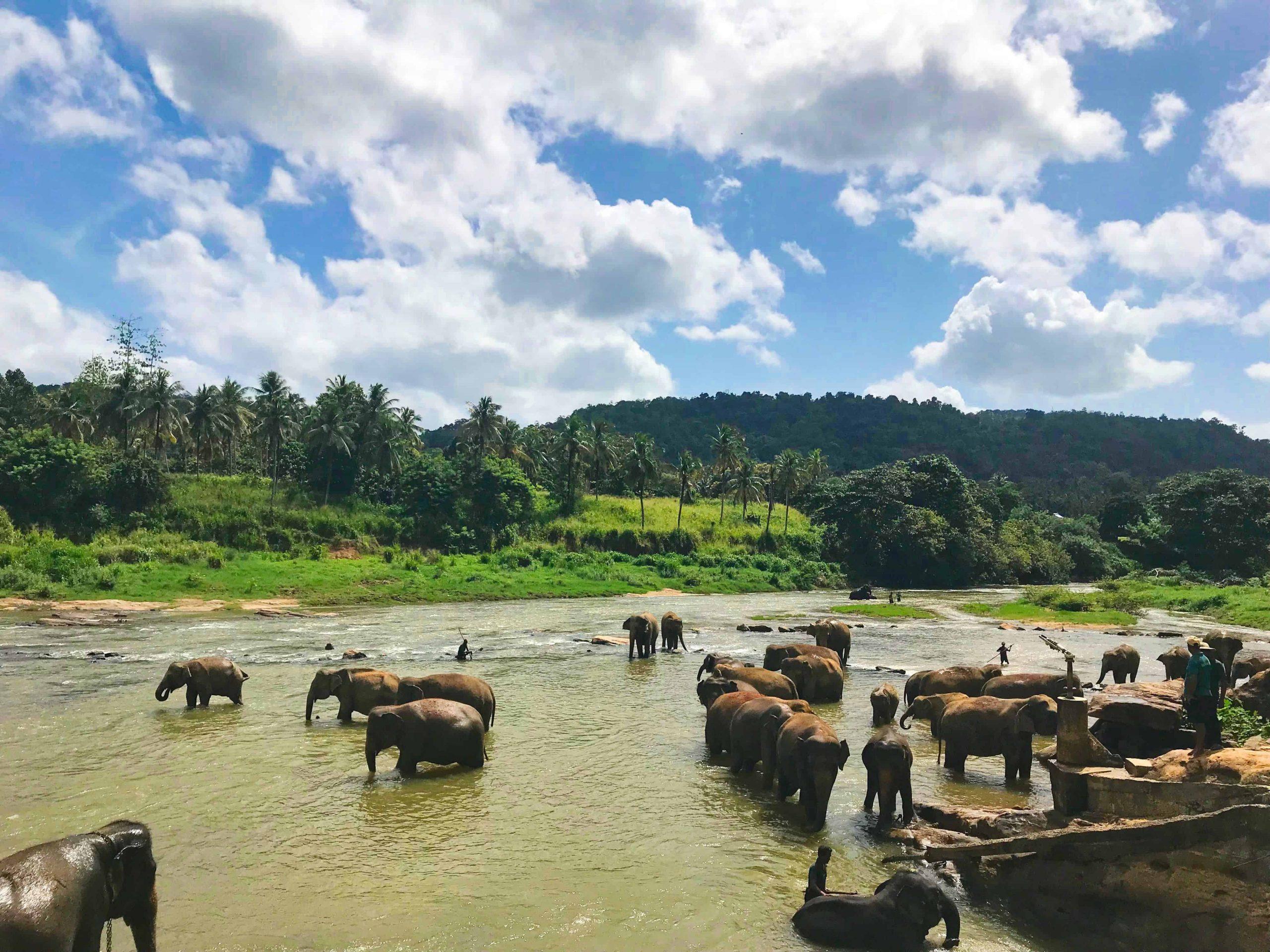 6 infos pour ceux qui ont acheté le deal fou vers le Sri Lanka