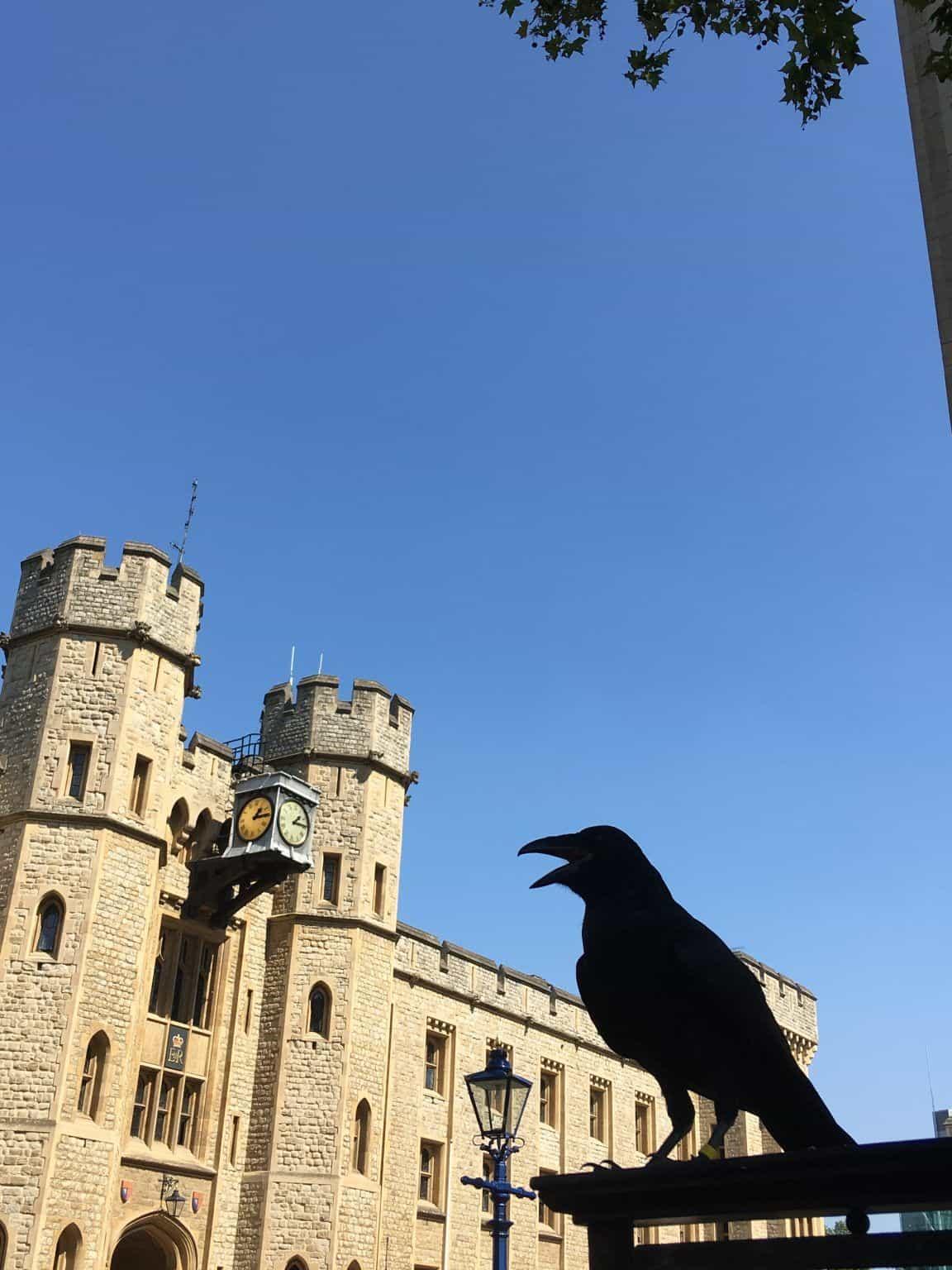 La tour blanche et un corbeau, petit résident de la Tour de Londres