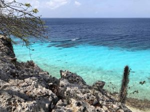 My Free Week In Bonaire, A Beautiful Dutch Island In The Caribbean