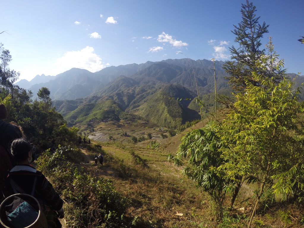 Rizières à Sapa, Vietnam