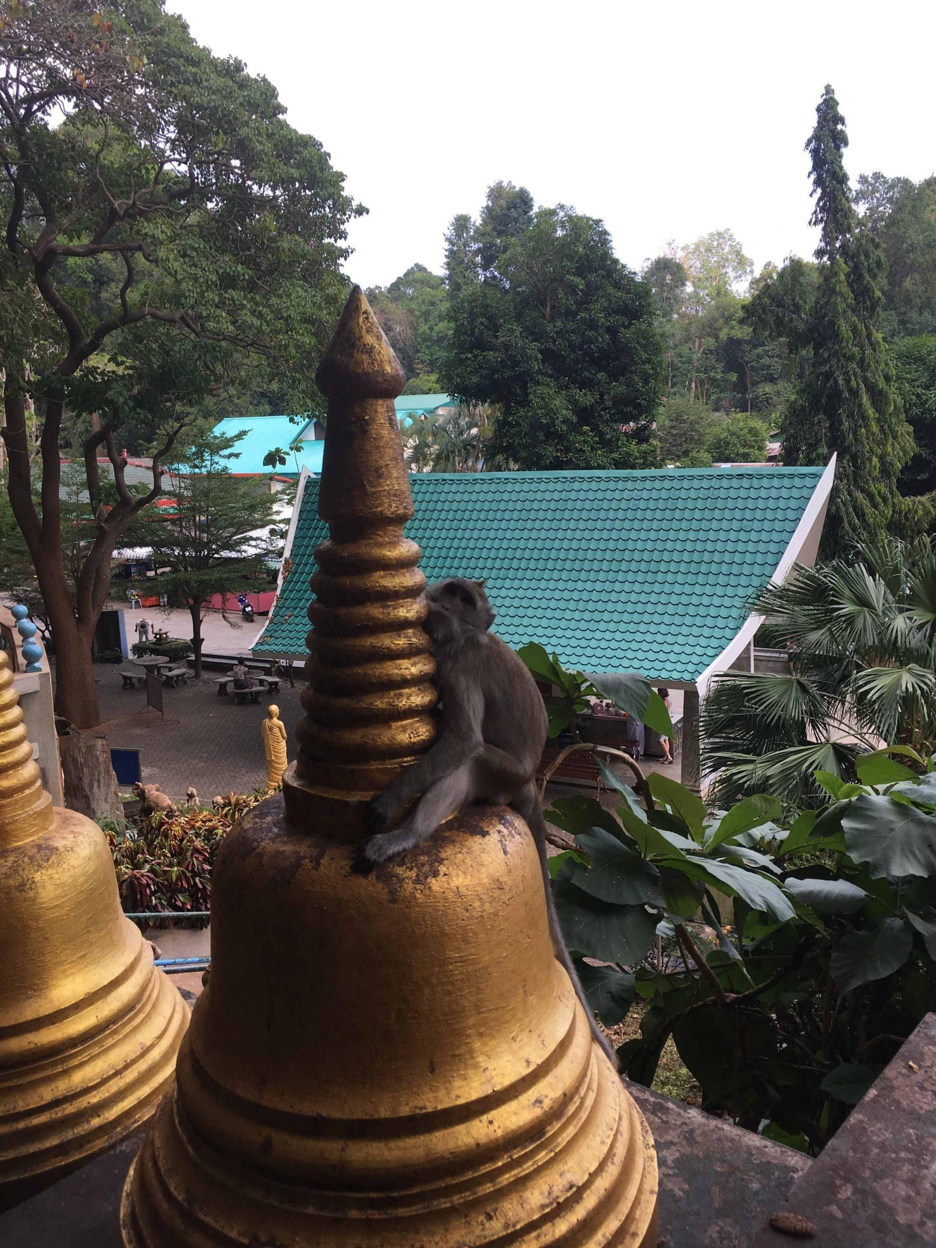 Singe et temple