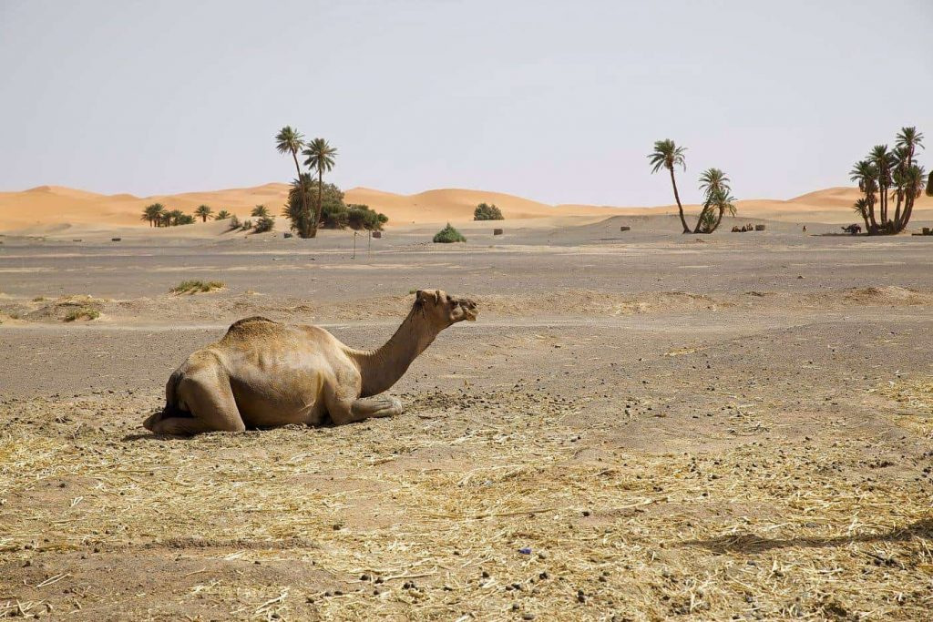 You are currently viewing Coup de coeur au Maroc: 6 endroits à découvrir