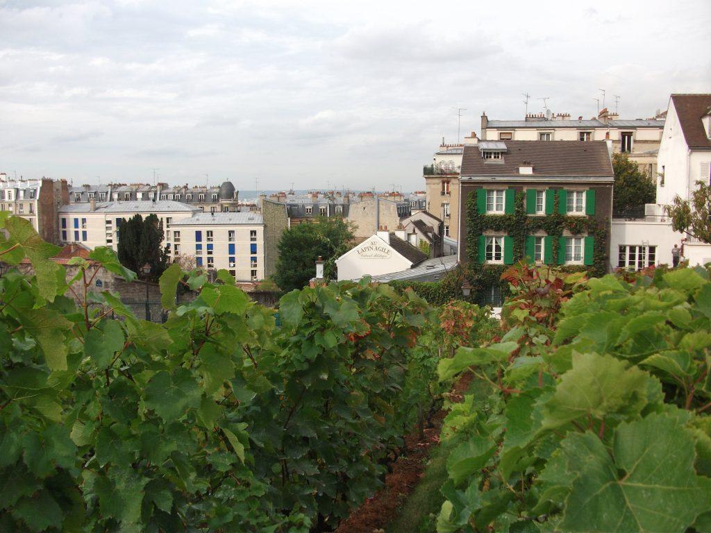 paris-vigne-montmartre