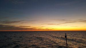 Mes 3 expériences de voyage dans la région de Tampa Bay